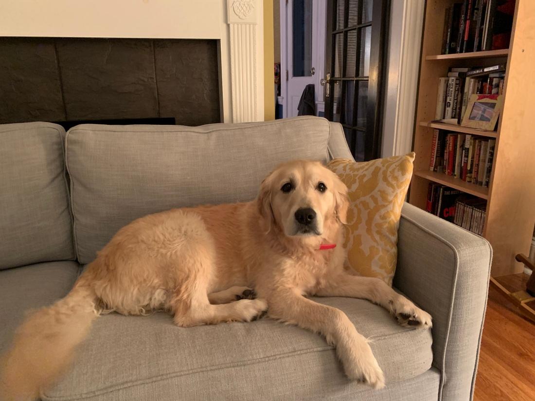 Ruby on blue sofa.JPG